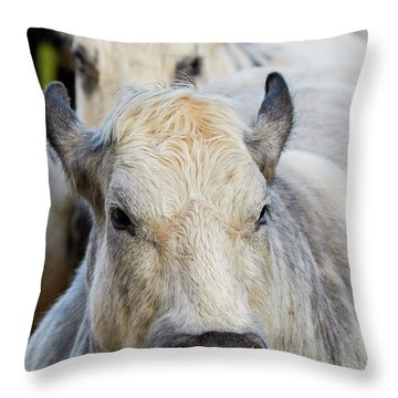 Throw Pillow featuring the photograph Cows In A Row by Nick Biemans