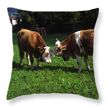 Cows Nuzzling Throw Pillow by Sally Weigand