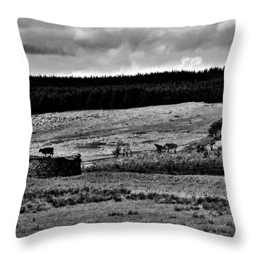 Cows On A Wall Throw Pillow