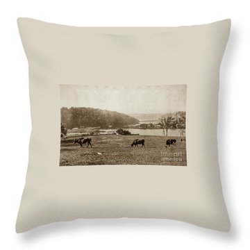 Throw Pillow featuring the photograph Cows On Baker Field by Cole Thompson