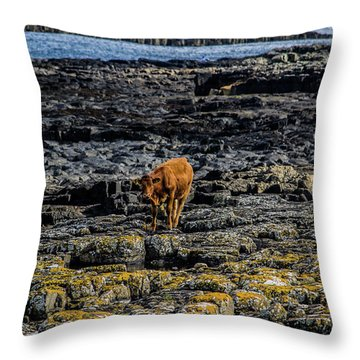 Cows On The Rocks Throw Pillow
