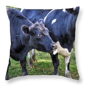 Cows Sticking Out Tongues Throw Pillow