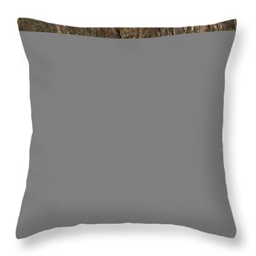 Throw Pillow featuring the photograph Coxing Kill In March #1 by Jeff Severson