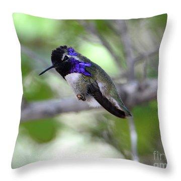 Coy Costa's Hummingbird Throw Pillow