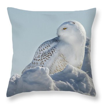 Throw Pillow featuring the photograph Coy Snowy Owl by Rikk Flohr
