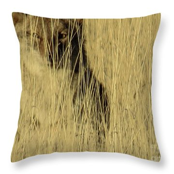 Coyote 3 Throw Pillow