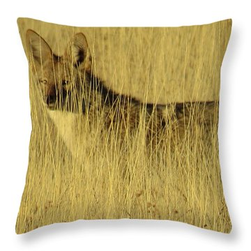 Coyote 4 Throw Pillow