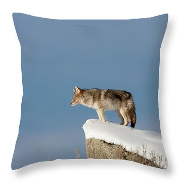 Coyote At Overlook Throw Pillow