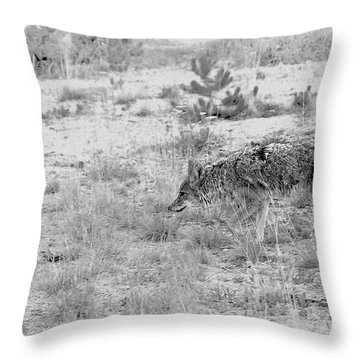 Coyote Blending In Throw Pillow by Christine Till
