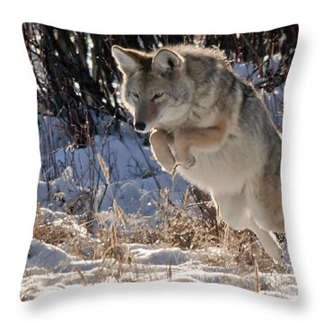 Coyote In Mid Jump Throw Pillow