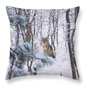 Coyote In The Aspens Throw Pillow
