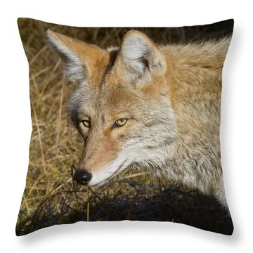 Coyote In The Wild Throw Pillow
