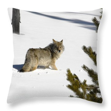 Coyote In Winter Throw Pillow