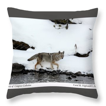 Coyote In Yellowstone National Park Throw Pillow