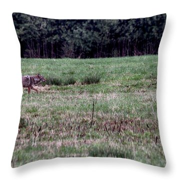 Coyote On The Prowl Throw Pillow