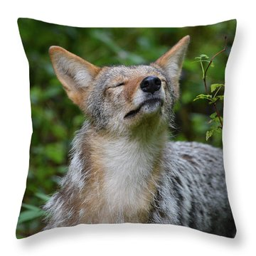 Coyote Soaking Up The Morning Sun Throw Pillow