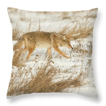 Coyote Stalk Throw Pillow