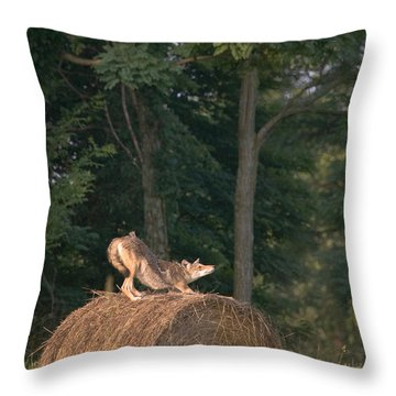 Coyote Stretching On Hay Bale Throw Pillow