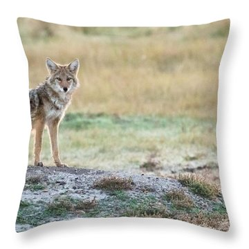 Throw Pillow featuring the photograph Coyotee by Kelly Marquardt