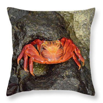 Crab Throw Pillow by Will Burlingham