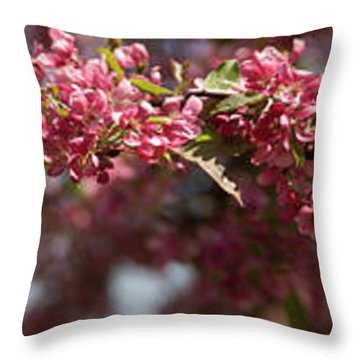 Crabapple In Spring Panoramic Throw Pillow