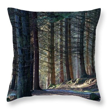 Craig Dunain - Forest In Winter Light Throw Pillow