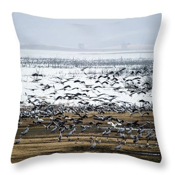 Throw Pillow featuring the photograph Crane Dance by Torbjorn Swenelius