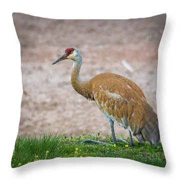 Throw Pillow featuring the photograph Crane Down by Bill Pevlor