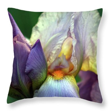 Cream And Purple Bearded Iris With Bud 0065 H_2 Throw Pillow