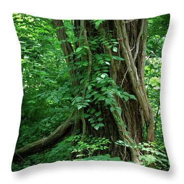 Creek And Wood At Roman Nose State Park #2 Throw Pillow