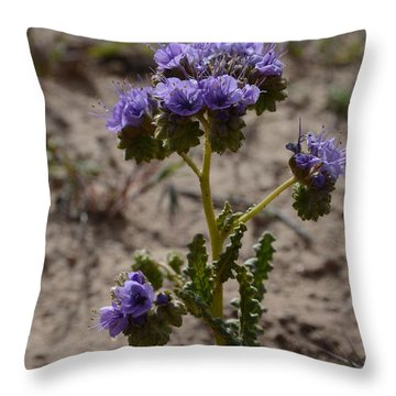 Crenulate Phacelia Flower Throw Pillow