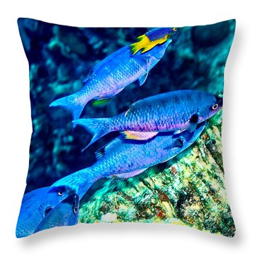 Throw Pillow featuring the photograph Creole Wrasse And Little Spanish Hogfish by Perla Copernik