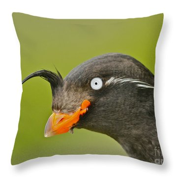 Auklets Throw Pillows