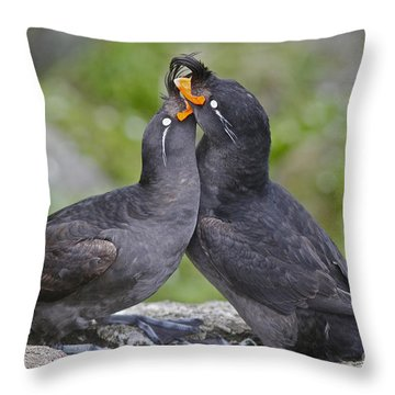 Crested Auklet Pair Throw Pillow
