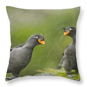 Crested Auklets Throw Pillow