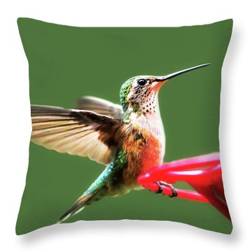 Crested Butte Hummingbird Throw Pillow