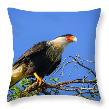 Crested Caracar Throw Pillow