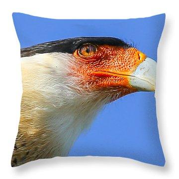 Crested Caracara Face Throw Pillow