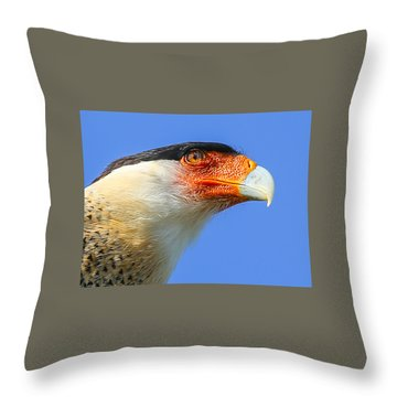 Crested Caracara Face Throw Pillow