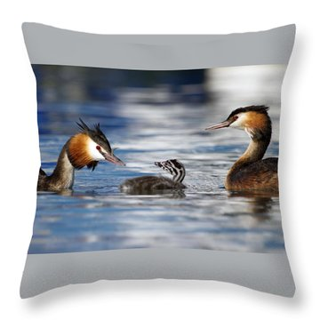 Crested Grebe, Podiceps Cristatus, Ducks Family Throw Pillow