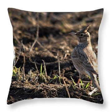 Crested Lark Throw Pillow by Cliff Norton