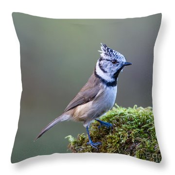 Crested Tit Throw Pillow by Torbjorn Swenelius
