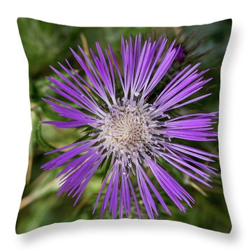 Cretan Thistle Throw Pillow