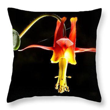 Crimson Columbine Flower Hanging In There Throw Pillow