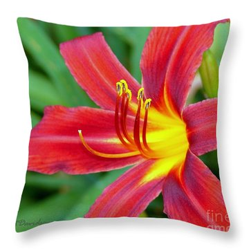 Throw Pillow featuring the photograph Crimson Day Lilly by Patricia L Davidson