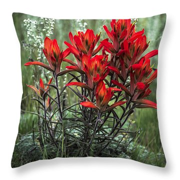 Crimson Red Indian Paintbrush Throw Pillow by The Forests Edge Photography - Diane Sandoval