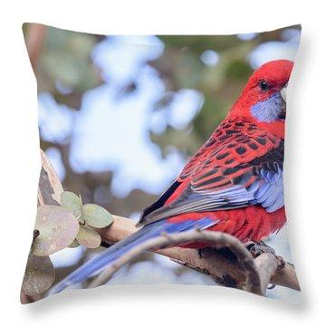 Crimson Rosella 03 Throw Pillow