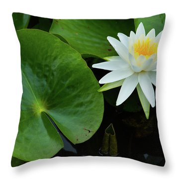Throw Pillow featuring the photograph Crisp White And Yellow Lily by Dennis Dame