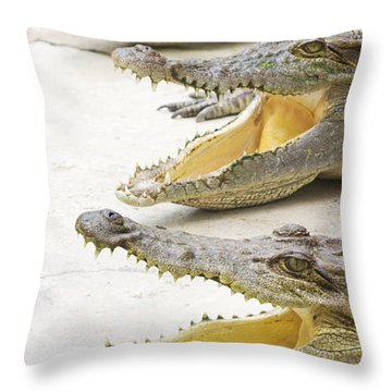 Crocodile Choir Throw Pillow by Jorgo Photography - Wall Art Gallery