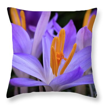 Throw Pillow featuring the photograph Crocus Explosion by Douglas Stucky